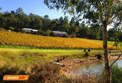 exploretoursperth - BIckley Valley